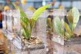 09242018 Plant Science 03