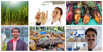 Collage of scientists and plants