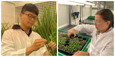 Postdocs Chen Lin and Emese Eysholdt-Derzso in the lab