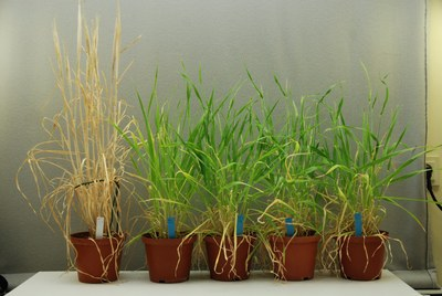 plants in the lab