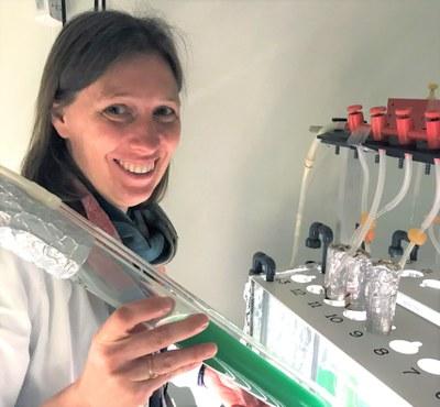 Scientist in lab with cyanobacteria columns