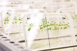 09242018 Plant Science 07