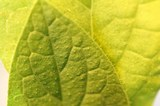 09242018 Plant Science 04