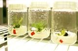 09242018 Plant Science 17