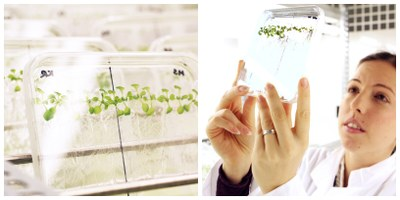 Plants in transparent boxes on the left. Scientist studies box on the right.