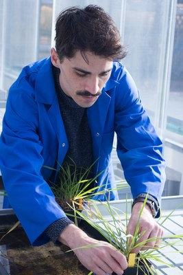 Scientist in the greenhouse inspecting plants